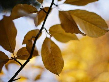 Fraktale można odnaleźć nawet w liściach drzew (fot. z archiwum Muzeum Górnośląskiego, Witalis Szołtys)