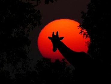 Najbliższe spotkanie to okazja do podróży do gorącej Afryki (fot. pixabay)