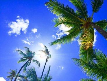 Hawaje będą tematem przewodnim animacji i zabaw w Auchan Bielsko-Biała (fot. pixabay)