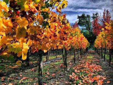 Piękne, jesienne pejzaże powstaną 27 września w katowickim Empiku (fot. foter.com)