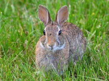 Warownia Pszczyński Rycerzy zaprasza w święta na spotkanie z królikami (fot. materiały Warowni)