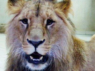 Nowy mieszkaniec chorzowskiego zoo (fot. mat. Śląskiego Ogrodu Zoologicznego)