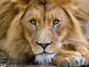 W chorzowskim zoo mieszkają 324 gatunki zwierząt, w tym 75 gatunkow ssaków (fot. pixabay)