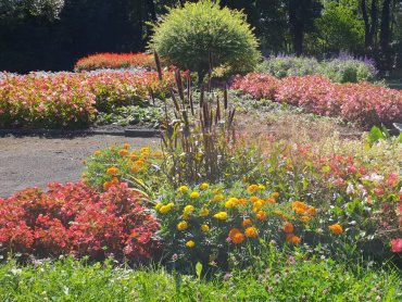 Miejski Ogród Botaniczny położony jest w śródmieściu Zabrza, przy ul. Piłsudskiego 60 (fot. Katarzyna Esnekier/SilesiaDzieci.pl)