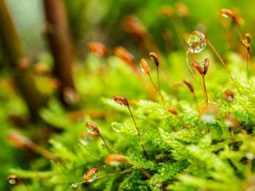 Uczestników warsztatów czeka fascynująca wyprawa do świata roślin (fot. pixabay)