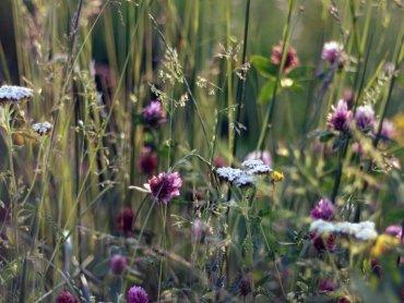 Międzynarodowy Dzień Bioróżnorodności to okazja do zabaw na świeżym powietrzu w Śląskim Ogrodzie Botanicznym w Radzionkowie (fot. foter.com)