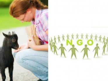 Forum będzie okazją do spotkania ze specjalistami z Poradni Pedagogiczno-Psychologicznej. Będzie też można adoptować zwierzaka (zdj. mat. org i sxc.hu)