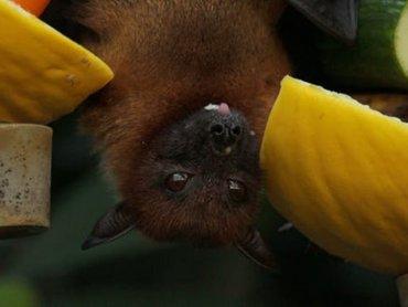Noc nietoperzy odbędzie się 24/25 sierpnia w Śląskim Ogrodzie Botanicznym (fot. pexels)