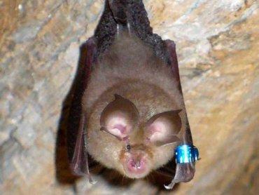 Zwiedzanie Obserwatorium Nietoperzy odbywa się w małych grupach (fot. mat. organizatora)
