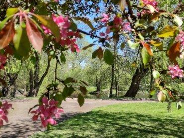 Miejski Ogród Botaniczny w Zabrzu (fot. UM Zabrze)