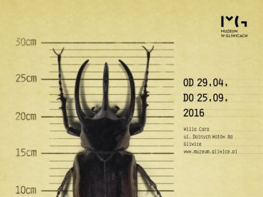 Finisaż wystawy w Willi Caro będzie okazją do stworzenia domków dla owadów (fot. mat. organizatora)