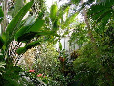 Po miesięcznej przerwie gliwicka Palmiarnia jest już otwarta dla zwiedzających (fot. mat. organizatora)