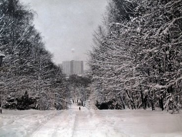 Park Śląski zaprasza na spacer  (fot. archiwum zdjęć Parku na Facebooku)