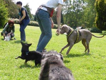 Park Śląski zaprasza na wspólne spacery czworonogów i ich właścicieli (fot. materiały Parku Śląskiego)