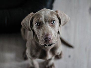 Miłośnicy psów spotkają się w Gliwicach po raz 42. (fot. mat. organizatora)