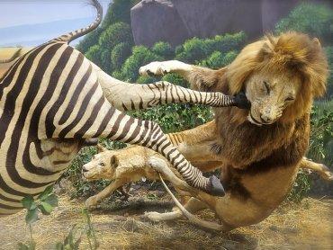 Telewizyjne programy przyrodnicze często przedstawiają brutalne sceny (fot. foter.com)