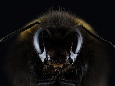 Pszczoły, choć nie każdy zdaje sobie z tego sprawę, są bardzo pożytecznymi owadami (fot. pixabay)