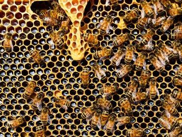 Wydarzenie to również okazja do zakupu miodów i produktów pszczelich (fot. mat. pixabay)
