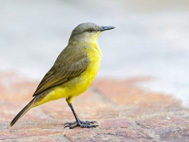Międzynarodowy Dzień Ptaków obchodzimy 1 kwietnia, ale w śląskim zoo 29 marca będzie można z tej okazji skorzystać z szeregu atrakcji (fot. foter.com)