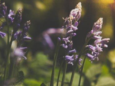 W Śląskim Ogrodzie Botanicznym czekają na Was atrakcje z okazji Dnia Matki oraz Dnia Dziecka (fot. foter.com)