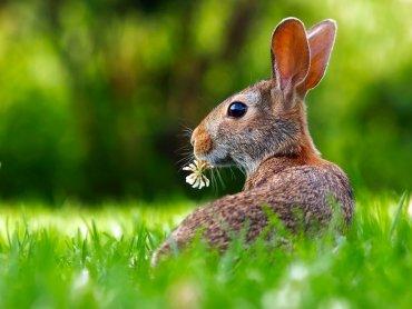 Jak niektóre gatunki mogą wpłynąć na środowisko naturalne? Tego dowiecie się w Muzeum Górnośląskim (fot. pixabay)