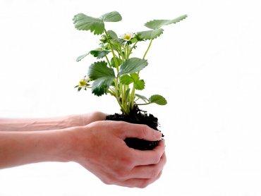 Aż 10 tys. sadzonek zostanie rozdanych w trakcie ogólnopolskiej kampanii Ekoodpowiedzialni (fot. Pixabay)