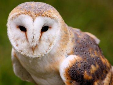 Sowy to intrygujące i tajemnicze ptaki (fot. foter.com)