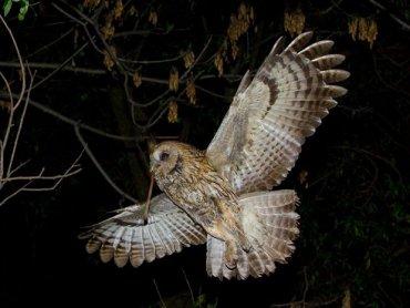 Wydarzenie to również obserwacja ptaków w terenie (fot. mat. organizatora)