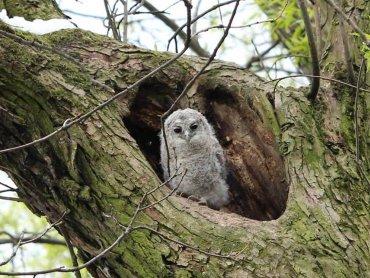 Sowia noc odbędzie się 12 kwietnia w Śląskim Ogrodzie Botanicznym w Radzionkowie (fot. mat. organizatora)