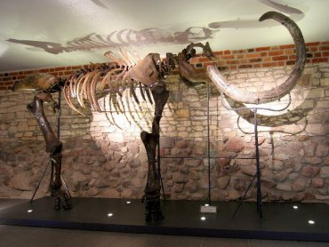 Zamek Piastowski w Gliwicach zaprasza na spotkanie z mamutem (fot. materiały muzeum)