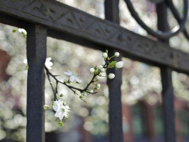 Dzięki kwietnym ozdobom wykonanym w muzeum wprowadzicie w domach wiosenny nastrój (fot. Witalis Szołtys)