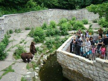 Tylko 120 szczęśliwców będzie mogło zwiedzić zoo nocą (fot. materiały zoo)