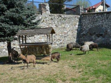 Wielkanocny zagajnik to miejsce, które warto odwiedzić w czasie Wielkanocy (fot. mat. prasowe)