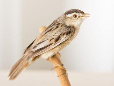 Zajęcia w Muzeum Górnośląskim przybliżą dzieciom świat zwierząt (fot. Witalis Szołtys)